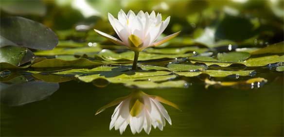Heilkunde und Therapie Lotus