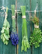 Phytotherapie Pflanzenheilkunde Heilpflanzen